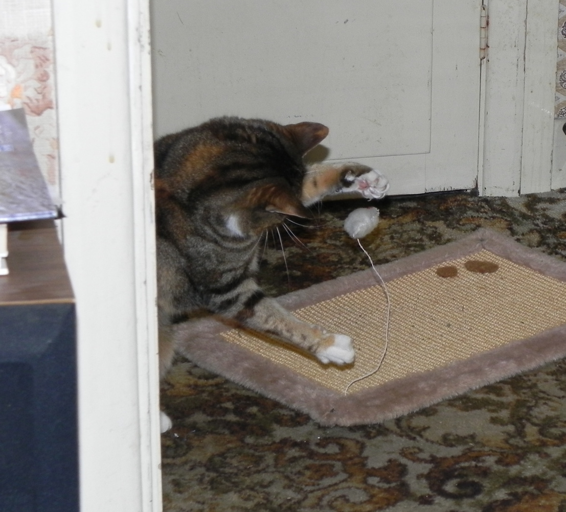 Playing Catnip Mousey