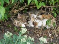 Molly in her Bush.jpg